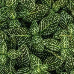 Parede de folhas verdes mural de parede em vinil autocolante decorativo. Aplique esta imagem em qualquer superfície lisa e sem textura. Além disso, ao contrário do papel de parede tradicional, não precisa aplicar colas.